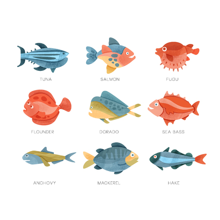 Sea fish set, tuna, salmon, fugu, flounder, dorado, sea bass, anchovy, mackerel hake vector Illustrations isolated on a white background