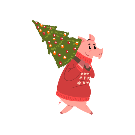 Cute pig character dressed in red warm sweater carrying Christmas tree, Chinese symbol of New Year, design element for Christmas card, calendar, invitation vector Illustration vector Illustration isolated on a white background.