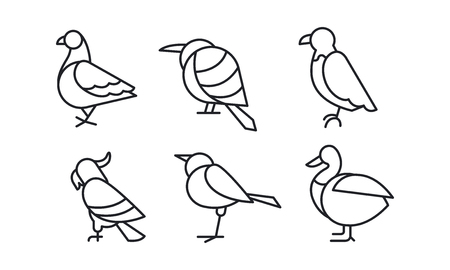 Vector set of birds in linear style. Pigeon, sparrow, eagle, parrot, duck and colibri Ilustrace