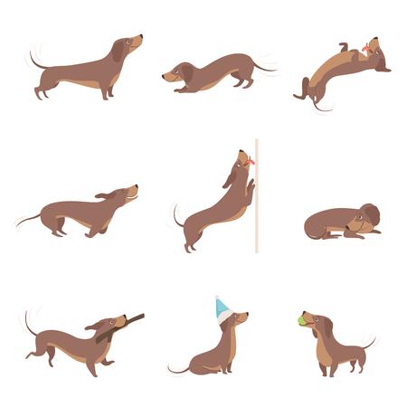 Grappige speelse raszuivere bruine teckel hond activiteiten instellen vector illustraties op een witte achtergrond