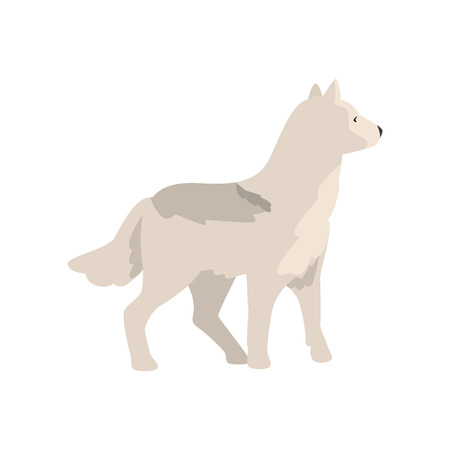 Polar wolf arctic animal vector Illustration isolated on a white background.