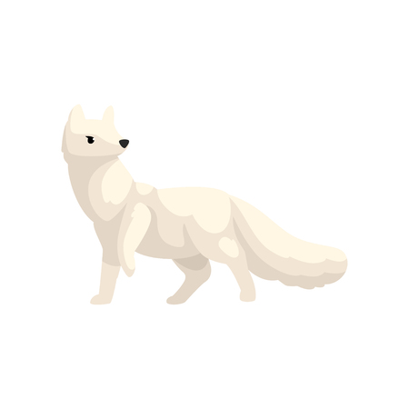 White polar fox arctic animal vector Illustration isolated on a white background.