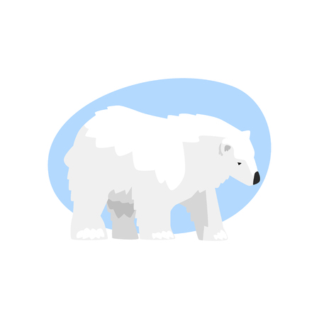 White arctic bear animal vector Illustration isolated on a white background.