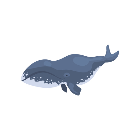 Polar killer whale arctic animal vector Illustration on a white background