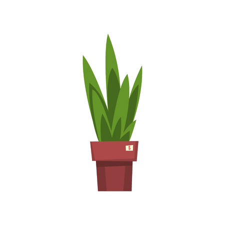 Green home decorative plant, unnecessary thing, garage sale vector Illustration isolated on a white background.