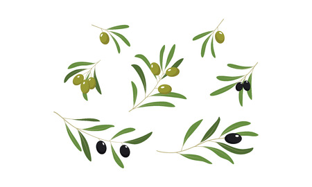 Olive branches with leaves and olives set vector Illustration isolated on a white background.