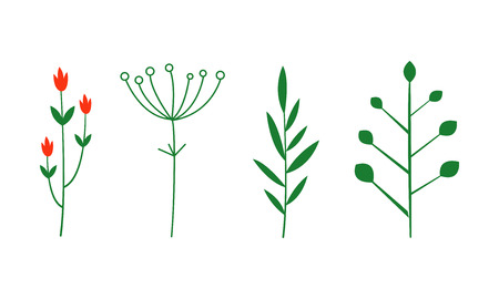 Spices and herbs set, botanical plants vector Illustration isolated on a white background.