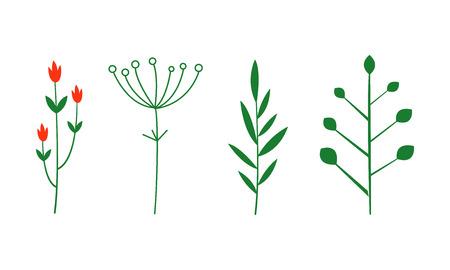Zestaw przypraw i ziół, rośliny botaniczne wektor ilustracja na białym tle.