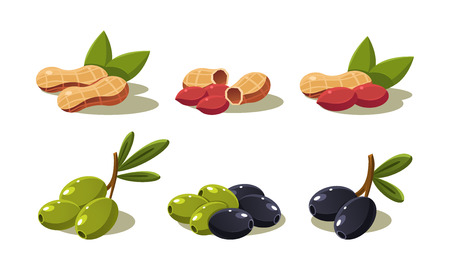 Fresh olives and peanut, vegetarian healthy organic products set vector Illustration on a white background Stock Illustratie