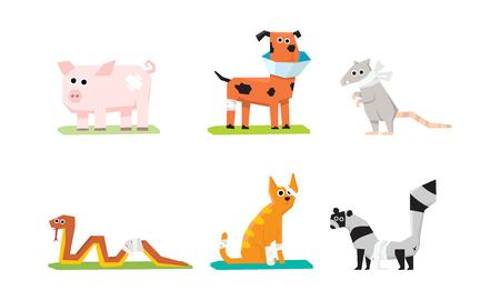 Zieke en gewonde dieren set, veterinaire zorg, varken, rat, kat, slang, hond, wasbeer met pleisters en verband vector illustratie geïsoleerd op een witte achtergrond.