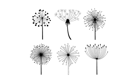 Collection of 6 different linear dandelion flowers with fluffy seeds. Floral theme. Decorative graphic elements for postcard or notebook. Monochrome vector illustrations isolated on white background.