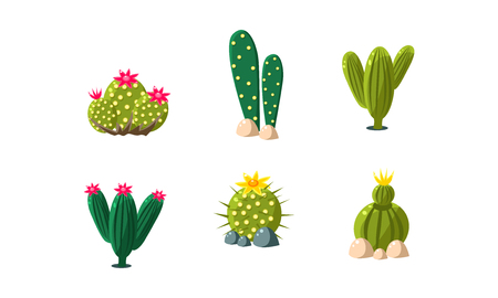 Cactuses set, bright flowering desert plants vector Illustration isolated on a white background.