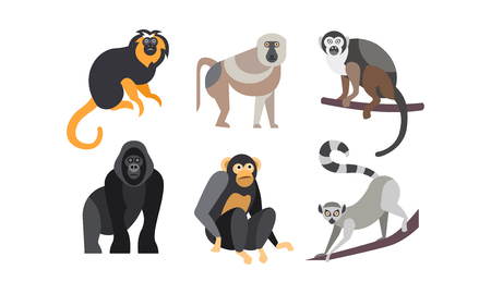Collection of monkeys, different breeds of monkeys vector Illustration isolated on a white background.