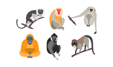 Different breeds of monkeys set vector Illustration isolated on a white background.