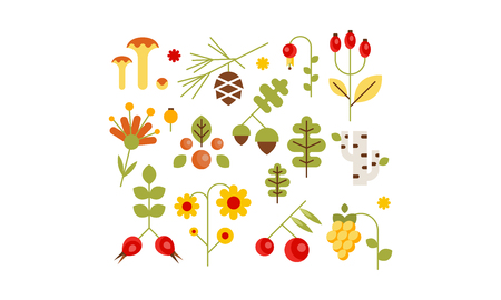 Collection of forest design elements, botanic signs, herbs, mushrooms, berries, tree leaves, flowers vector Illustration isolated on a white background.