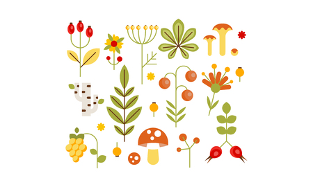 Collection of forest design elements, herbs, mushrooms, berries, tree leaves, flowers vector Illustration isolated on a white background.