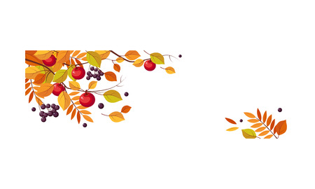 Autumn abstract background with space for text, banner with bright autumn leaves and berries vector Illustration template.