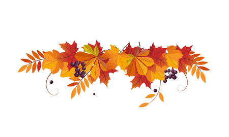 Autumn background with space for text, banner with bright autumn chokeberry, rowan and maple leaves vector Illustration template.
