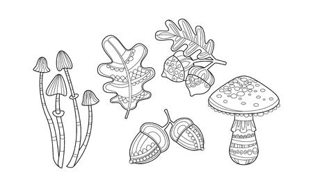 Colección de plantas dibujadas a mano, hojas monocromas, setas, avellanas y bellotas vector ilustración aislada sobre fondo blanco.