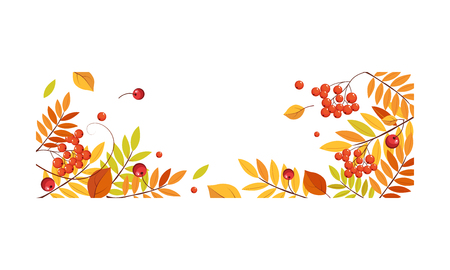 Autumn abstract background with space for text, banner with bright autumn rowan leaves vector Illustration template.