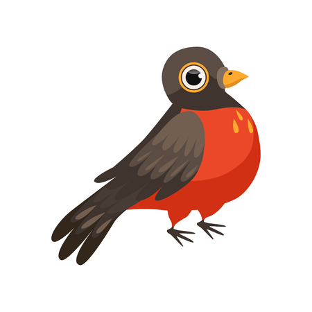 Colorful beautiful robin bird vector Illustration isolated on a white background.