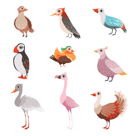 Collection of beautiful birds, flamingo, puffin, waxwing, cardinal, bright, crane vector Illustration isolated on a white background.