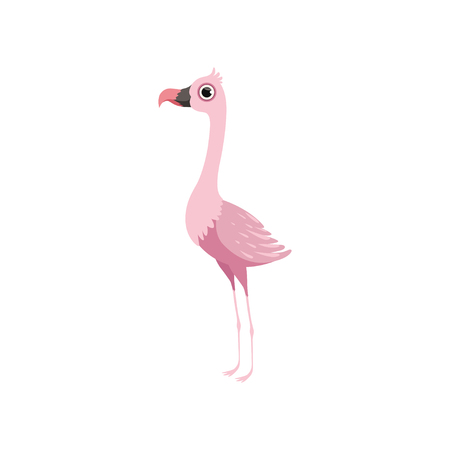 Beautiful pink flamingo bird vector Illustration isolated on a white background.