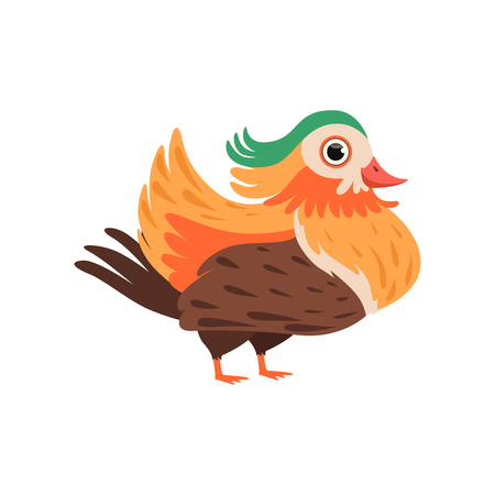 Colorful bright beautiful bird vector Illustration isolated on a white background.