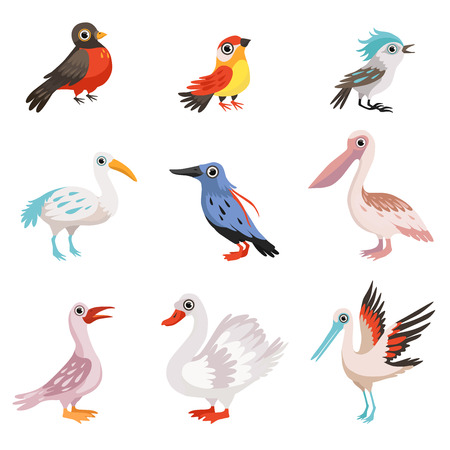 Collection of beautiful birds, crane, stork, swan, kingfisher, pelican, robin, finch, blue jay birds vector Illustration isolated on a white background.