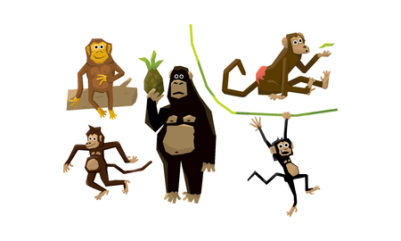 Funny monkeys of various breeds, animal characters eating fruits and hanging on vines vector Illustration Illustration