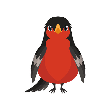 Bullfinch bird vector Illustration isolated on a white background.