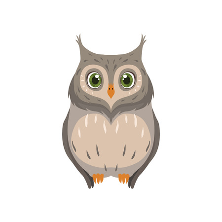 Cute owl, lovely bird cartoon character front view vector Illustration isolated on a white background.