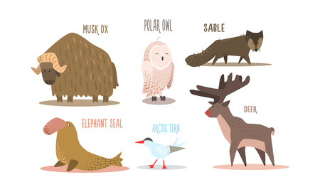Collection of Arctic animals with names, polar owl, musk ox, sable, elephant seal, arctic tern, deer vector Illustration isolated on a white background. Ilustração