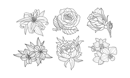 Collection of 6 hand drawn flowers. Rose, lily, peony, orchid and hibiscus. Beautiful floral elements for wedding invitation or postcard. Monochrome vector illustrations isolated on white background.