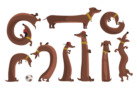 Dachshund dog set, cute funny long dog in different situations vector Illustrations Illustration