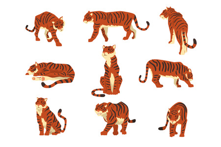 Powerful tiger in different actions set of cartoon vector Illustrations isolated on a white background.