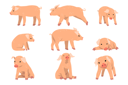 Cute little pig set, funny piggy in different actions set of cartoon vector Illustrations isolated on a white background.