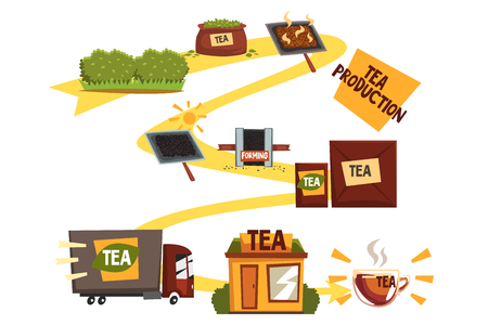 Tea production, tea manufacturing process from plantation to shop cartoon vector illustration, web banner