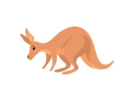 Canguro marrón, lindo Wallaby australiano carácter animal ilustración vectorial sobre fondo blanco. Ilustración de vector