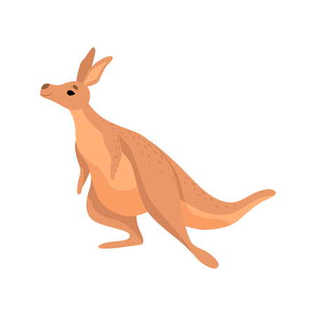 Cute Brown Kangaroo, Wallaby Australian Animal Character Vector Illustration on White Background.