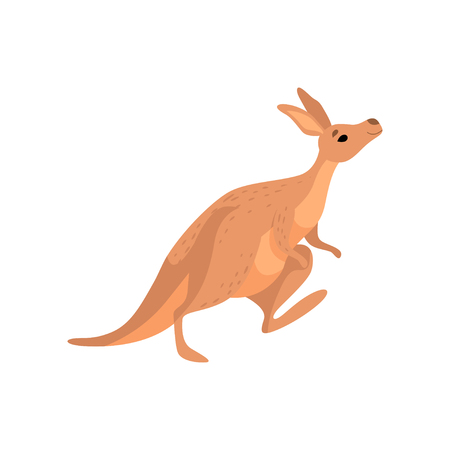 Kangaroo, Cute Brown Wallaby Australian Animal Character Vector Illustration on White Background.