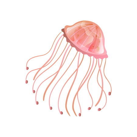 Jellyfish, Beautiful Coral Swimming Marine Underwater Creature Vector Illustration on White Background.