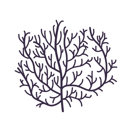 Seaweed, Ocean Coral, Marine or Aquarium Underwater Plant Vector Illustration on White Background. Çizim
