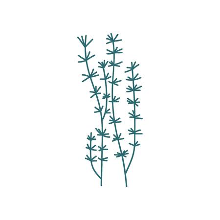 Seaweeds, Green Marine or Aquarium Underwater Plant Vector Illustration on White Background.
