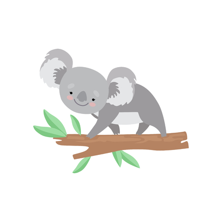 Cute Koala Bear Climbing on Tree Branch, Lovely Grey Animal Character Vector Illustration on White Background.