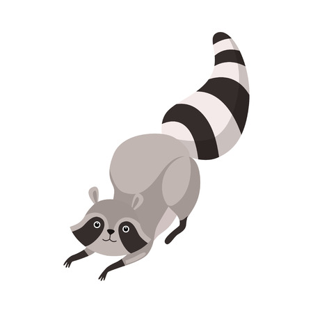 Cute Grey Raccoon Humanized Animal Character Vector Illustration on White Background.