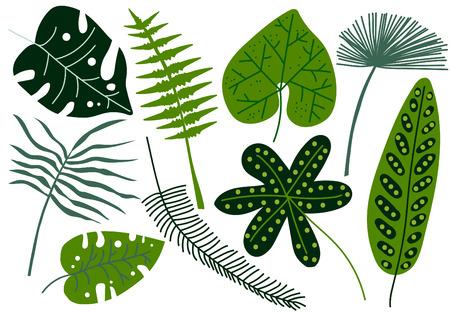 Collection of Tropical Leaves, Exotic Jungle Palm Tree Leaves Vector Illustration on White Background.