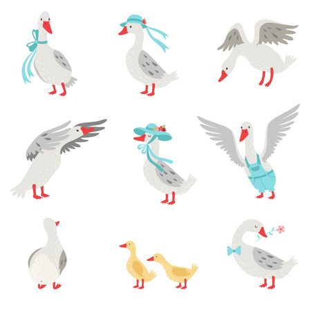 Collection of Geese and Goslings in Different Situations, White Birds Cartoon Characters Vector Illustration on White Background.