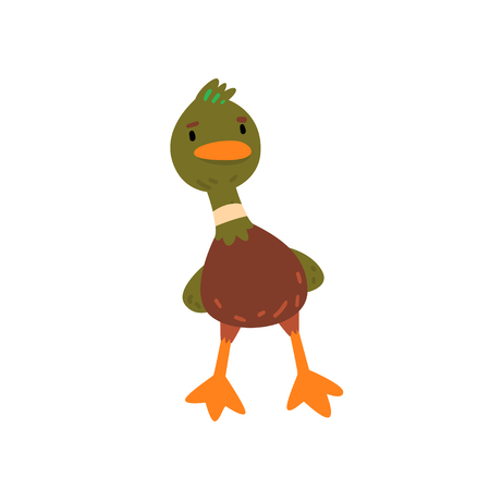 Male Mallard Duck, Cute Funny Duckling Cartoon Character Front View Vector Illustration Çizim