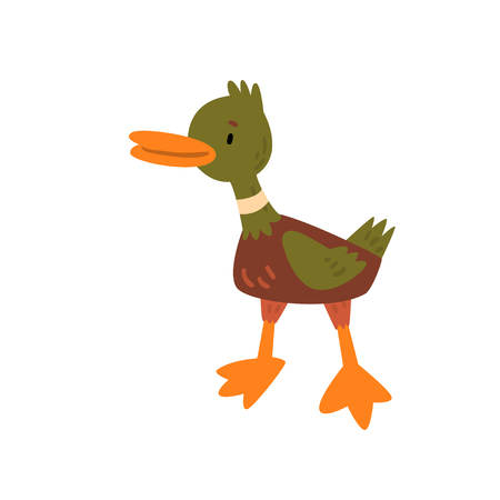 Male Mallard Duckling Cartoon Character Vector Illustration